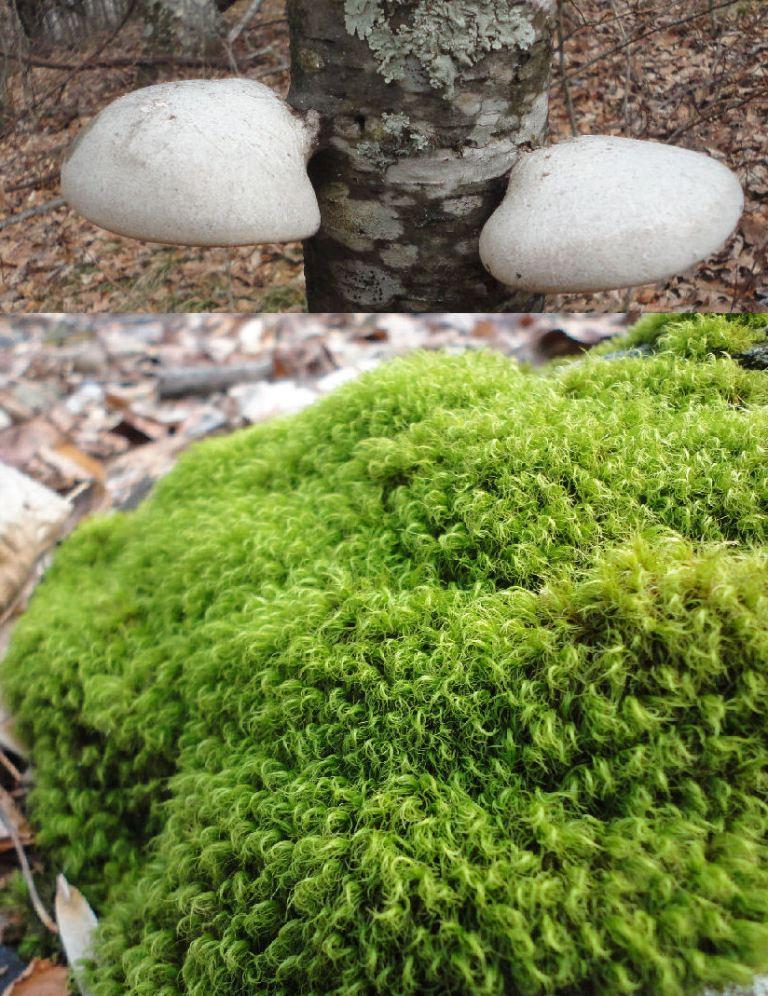 MushroomsNMoss